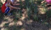Наш огород