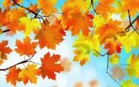 """Осенний утренник в старшей группе """"Осенние картинки"""""""